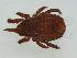 (Nothridae - FINOR-20120003)  @14 [ ] Copyright (2012) R. Penttinen 2012