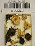 (Lepiota cristata - H6042261)  @11 [ ] CreativeCommons - Attribution Non-Commercial Share-Alike (2013) Balint Dima Botanical Museum, Finnish Museum of Natural History, University of Helsinki