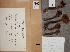 (Tricholoma bufonium - OULU.0029038)  @11 [ ] CreativeCommons - Attribution Non-Commercial (2012) Anna L. Ruotsalainen University of Oulu