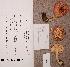 (Russula betularum - TUR170733)  @11 [ ] CreativeCommons - Attribution Non-Commercial (2012) Anna L. Ruotsalainen University of Oulu