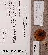 (Russula citrinochlora - TUR171635)  @11 [ ] CreativeCommons - Attribution Non-Commercial (2012) Anna L. Ruotsalainen University of Oulu