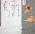(Russula pelargonia - TUR176246)  @11 [ ] CreativeCommons - Attribution Non-Commercial (2012) Anna L. Ruotsalainen University of Oulu