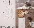 (Russula azurea - TUR190204)  @11 [ ] CreativeCommons - Attribution Non-Commercial (2012) Anna L. Ruotsalainen University of Oulu