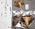 (Russula sardonia - TUR195159)  @11 [ ] CreativeCommons - Attribution Non-Commercial (2012) Anna L. Ruotsalainen University of Oulu