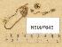 (Macrocystidia - H6007646)  @11 [ ] Copyright (2013) Diana Weckman Botanical Museum, Finnish Museum of Natural History, University of Helsinki