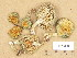 (Stropharia aeruginosa - H6028893)  @11 [ ] Copyright (2013) Diana Weckman Botanical Museum, Finnish Museum of Natural History, University of Helsinki