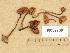 (Gymnopilus picreus - H6032709)  @11 [ ] Copyright (2012) Diana Weckman Botanical Museum, Finnish Museum of Natural History, University of Helsinki