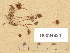 (Conocybe moseri var. bisporigera - H6034834)  @11 [ ] Copyright (2013) Diana Weckman Botanical Museum, Finnish Museum of Natural History, University of Helsinki