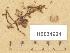 (Hygroaster - H6034924)  @11 [ ] Copyright (2013) Diana Weckman Botanical Museum, Finnish Museum of Natural History, University of Helsinki