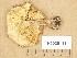(Tricholoma ulvinenii - H6035115)  @11 [ ] Copyright (2013) Diana Weckman Botanical Museum, Finnish Museum of Natural History, University of Helsinki