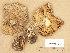 (Tricholoma arvernense - H6035125)  @11 [ ] Copyright (2013) Diana Weckman Botanical Museum, Finnish Museum of Natural History, University of Helsinki