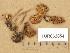 (Hebeloma pumilum - TUR062854)  @11 [ ] Copyright (2014) Diana Weckman Botanical Museum, Finnish Museum of Natural History, University of Helsinki