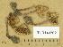 (Inocybe fraudans - TUR143702)  @11 [ ] Copyright (2014) Diana Weckman Botanical Museum, Finnish Museum of Natural History, University of Helsinki