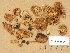 (Inocybe maculata - TUR144906)  @11 [ ] Copyright (2014) Diana Weckman Botanical Museum, Finnish Museum of Natural History, University of Helsinki