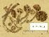 (Inocybe calamistrata - TUR146409)  @11 [ ] Copyright (2014) Diana Weckman Botanical Museum, Finnish Museum of Natural History, University of Helsinki