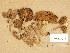 (Inocybe sp - TUR174033)  @11 [ ] Copyright (2014) Diana Weckman Botanical Museum, Finnish Museum of Natural History, University of Helsinki