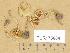(Inocybe geophylla - TUR175684)  @11 [ ] Copyright (2014) Diana Weckman Botanical Museum, Finnish Museum of Natural History, University of Helsinki