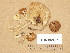 (Hebeloma fusisporum - TUR192497)  @11 [ ] Copyright (2014) Diana Weckman Botanical Museum, Finnish Museum of Natural History, University of Helsinki