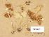 (Inocybe umbratica - TUR195070)  @11 [ ] Copyright (2014) Diana Weckman Botanical Museum, Finnish Museum of Natural History, University of Helsinki
