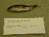 (Oncorhynchus clarkii - UW151158)  @12 [ ] Unspecified (default): All Rights Reserved  Unspecified Unspecified
