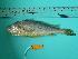 (Larimichthys - SCSIO-Fish-Z711017)  @14 [ ] Unspecified (default): All Rights Reserved  Unspecified Unspecified