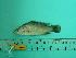 ( - SCSIO-Fish-Z711169)  @12 [ ] Unspecified (default): All Rights Reserved  Unspecified Unspecified
