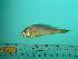 (Larimichthys - SCSIO-Fish-Z711271)  @14 [ ] Unspecified (default): All Rights Reserved  Unspecified Unspecified
