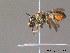 (Megachile pilicrus - BC ZSM HYM 11915)  @11 [ ] CreativeCommons - Attribution Non-Commercial Share-Alike (2010) ZSM (Zoologische Staatssammlung Muenchen) ZSM (Zoologische Staatssammlung Muenchen)