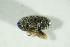 (Bruchidius imbricornis - GBOL08418)  @11 [ ] Unspecified (default): All Rights Reserved  Unspecified Unspecified