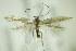 (Coleophora adjectella - BC ZSM Lep 82506)  @13 [ ] Unspecified (default): All Rights Reserved  Unspecified Unspecified