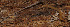 (Mecistocephalidae - GBOL02752)  @11 [ ] CreativeCommons - Attribution Non-Commercial Share-Alike (2013) Joerg Spelda ZSM (Zoologische Staatssammlung Muenchen)