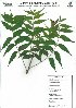 ( - DNAFR000051)  @11 [ ] Copyright (2011) Gujarat Biodiversity Gene Bank Gujarat Biodiversity Gene Bank