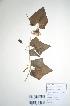 (Coccinia - DNAFR000695)  @11 [ ] Copyright (2014) Gujarat Biodiversity Gene Bank, GSBTM, DST, GoG Gujarat Biodiversity Gene Bank, GSBTM, DST, GoG