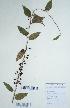 (Zizyphus - DNAFR000711)  @11 [ ] Copyright (2014) Gujarat Biodiversity Gene Bank, GSBTM, DST, GoG Gujarat Biodiversity Gene Bank, GSBTM, DST, GoG