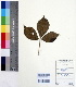 (Adansonia - DNAFR000206)  @11 [ ] Copyright (2014) Gujarat Biodiversity Gene Bank, GSBTM, DST, GoG Gujarat Biodiversity Gene Bank, GSBTM, DST, GoG