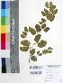 (Hardwickia - DNAFR000357)  @11 [ ] Copyright (2014) Gujarat Biodiversity Gene Bank, GSBTM, DST, GoG Gujarat Biodiversity Gene Bank, GSBTM, DST, GoG