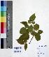 (Derris - DNAFR000666)  @11 [ ] Copyright (2014) Gujarat Biodiversity Gene Bank, GSBTM, DST, GoG Gujarat Biodiversity Gene Bank, GSBTM, DST, GoG