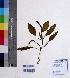 (Potamogeton natans - DNAFR000467)  @11 [ ] Copyright (2014) Gujarat Biodiversity Gene Bank, GSBTM, DST, GoG Gujarat Biodiversity Gene Bank, GSBTM, DST, GoG
