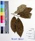(Casearia - DNAFR000508)  @11 [ ] Copyright (2014) Gujarat Biodiversity Gene Bank, GSBTM, DST, GoG Gujarat Biodiversity Gene Bank, GSBTM, DST, GoG