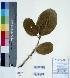 (Diospyros melanoxylon - DNAFR000404)  @11 [ ] Copyright (2014) Gujarat Biodiversity Gene Bank, GSBTM, DST, GoG Gujarat Biodiversity Gene Bank, GSBTM, DST, GoG