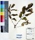 (Fernandoa - DNAFR000407)  @11 [ ] Copyright (2014) Gujarat Biodiversity Gene Bank, GSBTM, DST, GoG Gujarat Biodiversity Gene Bank, GSBTM, DST, GoG