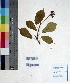 ( - DNAFR000660)  @11 [ ] Copyright (2014) Gujarat Biodiversity Gene Bank, GSBTM, DST, GoG Gujarat Biodiversity Gene Bank, GSBTM, DST, GoG