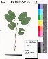 ( - DNAFR000042)  @11 [ ] Copyright (2011) Gujarat Biodiversity Gene Bank Gujarat Biodiversity Gene Bank