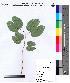 ( - DNAFR000076)  @11 [ ] Copyright (2012) Unspecified Gujarat State Biotechnology Mission