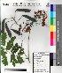( - DNAFR000028)  @11 [ ] Copyright (2011) Gujarat Biodiversity Gene Bank Gujarat Biodiversity Gene Bank