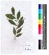 (Aquilaria - DNAFR000130)  @11 [ ] Copyright (2013) Gujarat Biodiversity Gene Bank, GSBTM, GoG, India. Gujarat Biodiversity Gene Bank, GSBTM, GoG, India.