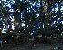 ( - DNAFR000163)  @11 [ ] Copyright (2013) Gujarat State Biotechnology Mission Gujarat Biodiversity Gene Bank
