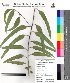 ( - DNAFR000021)  @11 [ ] Copyright (2011) Gujarat Biodiversity Gene Bank Gujarat Biodiversity Gene Bank
