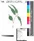 ( - DNAFR000050)  @11 [ ] Copyright (2011) Gujarat Biodiversity Gene Bank Gujarat Biodiversity Gene Bank