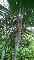 (Dypsis - DNAFR000755)  @11 [ ] Copyrights (2021) Gujarat Biodiversity Gene Bank, GSBTM, DST, GoG Gujarat Biodiversity Gene Bank, GSBTM, DST, GoG